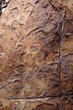 Skalning av den metalliska stenen Royaltyfria Bilder