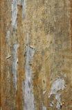 skalning av fernissa Royaltyfria Bilder