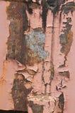 Skalning av målarfärg på gammal byggnad Royaltyfria Bilder