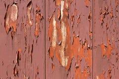 Skalning av målarfärg på röd ladugård Royaltyfri Foto