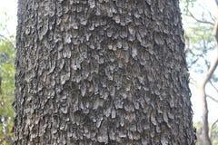 Skalning av skäll av trädet från stamsikt Royaltyfria Bilder