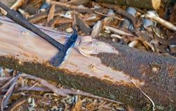 skalningsträ Royaltyfri Foto