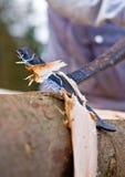 skalningsträ Royaltyfria Bilder
