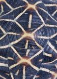 skalsköldpadda Arkivfoto