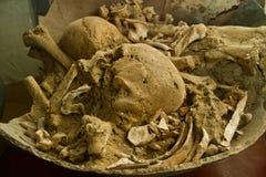 Skamieliny w Agua Blanca muzeum, Machalilla obywatel Obraz Royalty Free