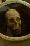 Skamieliny w Agua Blanca muzeum, Machalilla obywatel Fotografia Royalty Free