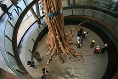 skamieniały drzewo zdjęcie stock