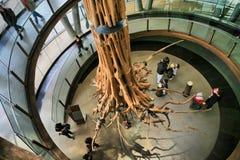 skamieniały drzewo zdjęcie royalty free