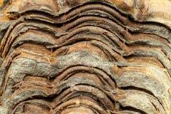 Skamieniały trylobitu odcisk w cedziny Odcisk historia Skamieniały trylobit w skale Makro- szczegół Zdjęcie Stock