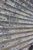 skamieniały zamknięta skamieniała skorupa obraz royalty free