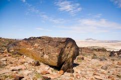 skamieniały drewna patagonii Zdjęcie Stock
