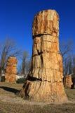 skamieniały drewno zdjęcia royalty free