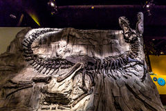 Skamieniały eksponat w Królewskim Tyrrell muzeum Obrazy Royalty Free