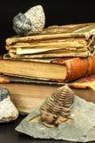 Skamieniały trylobitu odcisk w cedziny Odcisk historia Skamieniały trylobit w skale Fotografia Stock