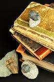 Skamieniały trylobitu odcisk w cedziny Odcisk historia Skamieniały trylobit w skale Obraz Royalty Free