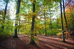 Skandinavisch bos in dalingszonlicht Royalty-vrije Stock Afbeelding