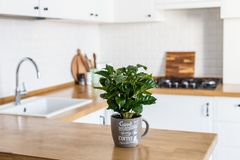 Skandinavische Art der modernen weißen Küche stockbild