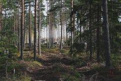 Skandinavischer Koniferenwald im Herbst lizenzfreie stockfotografie