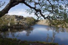 Skandinavisk natur Arkivfoto