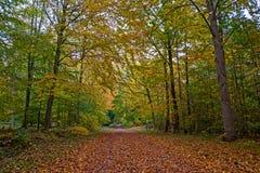 Skandinavisk skog i nedgången Arkivfoto