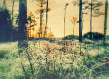 Skandynawa światło Zdjęcie Royalty Free