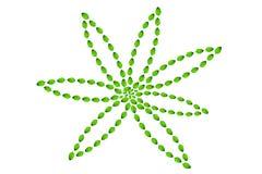 skapa blommagreenleaves Fotografering för Bildbyråer