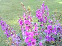 Skapad natur Royaltyfria Foton