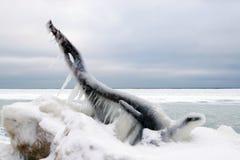 Skapat av naturen själv, vinter Royaltyfri Foto