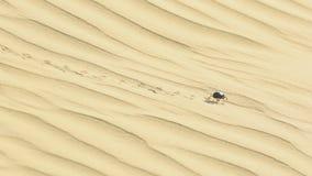 Skarabeusz ściga w pustyni zbiory