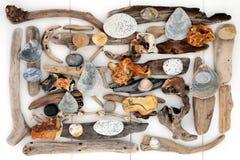 Skarb od plaży Obrazy Stock