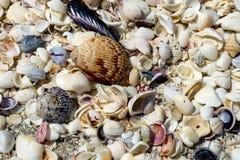 Skarb seashells Zdjęcia Royalty Free