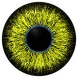 Skarp attraktiv djup ögontextur 3D 9 Royaltyfri Foto