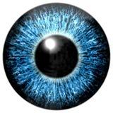 Skarp attraktiv textur för djupblått öga Arkivbild