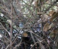 Skata som sätta sig på filialen av det torra trädet arkivbilder