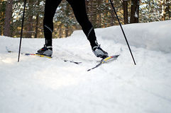 Skate Skiing. Offset skiing up a hill on the nordic trails at Wasaga Beach Provincial Park, Ontario, Canada Stock Photo