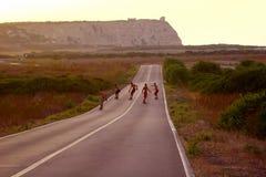 Skateboard gold. Skateboard along the road toward the golden horizon stock images