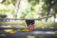Skateboard in the park. During autumn. Close up Royalty Free Stock Image