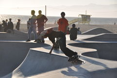 Skateboarding in counterlight royalty free stock image