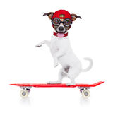 Skater boy dog. Jack russell skater dog with red cap ready to play, balancing on red skateboard, isolated on white background royalty free stock image