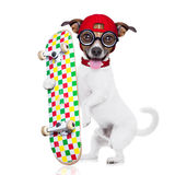 Skater boy dog. Jack russell skater dog with red cap ready to play, holding skateboard, isolated on white background stock photos