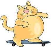 Skater Cat Stock Images