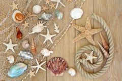 Skatter av havet Arkivfoto