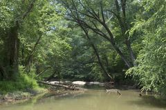 Skattskyldigt av Chattahoocheet River royaltyfria bilder
