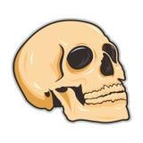 Skecth de crâne Photographie stock libre de droits
