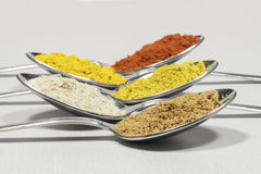 Skedar av flera typer av kryddor royaltyfri bild