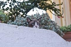 Skelögd katt i Chania, Kreta Arkivbild
