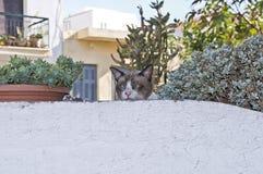 Skelögd katt i Chania, Kreta Royaltyfri Bild
