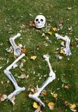 Skelet Royalty-vrije Stock Fotografie
