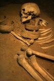 Skelet Royalty-vrije Stock Afbeeldingen