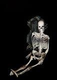 Skelet royalty-vrije stock foto's